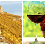 Wine tours in Georgia